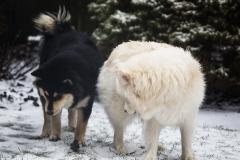 Nanook en Satu eerste sneeuw 2017_1