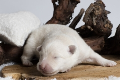a-nest dag 7_1 (pup zwart)