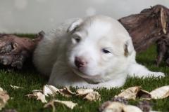 a-nest dag 14_8 (pup lichtblauw)