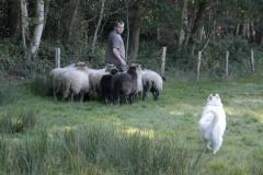 Nanook_schapenhoeden_2