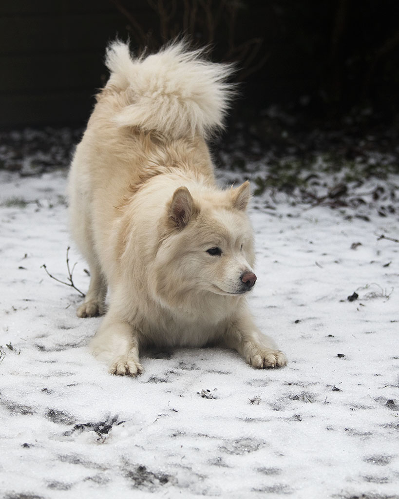 Sneeuw…….